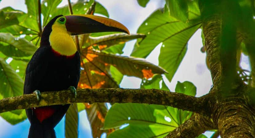 Nature & Wildlife Guided Tours, Waterfalls. AXR Jaco Costa Rica