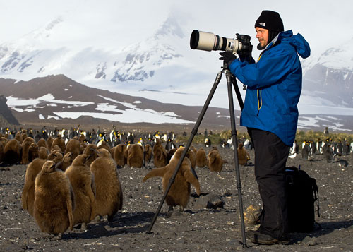 Shooting King Penguins at Salisbury Plain with a Canon