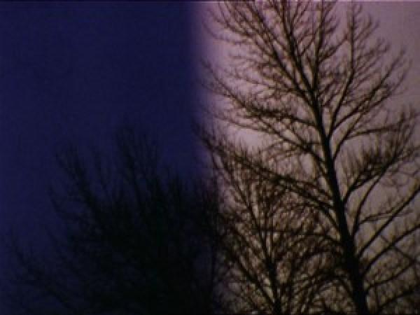 lindafenstermaker-2-Trees-poster-L