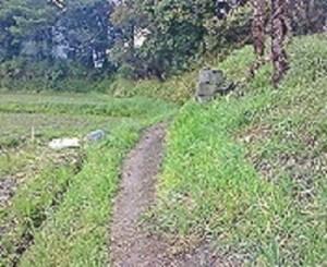 極楽寺→金泉寺への歩き遍路道②