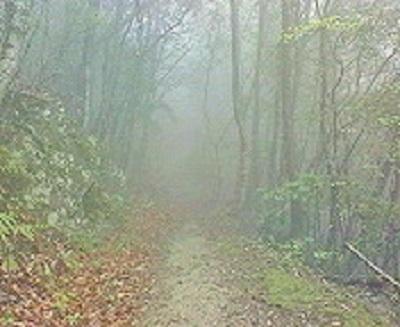 焼山寺へ向かう歩き遍路道。