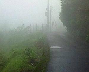 今日は朝から霧。