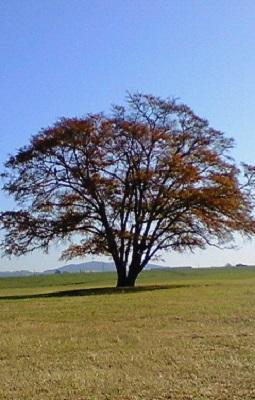 2007/10/25 08:57 ハルニレの木