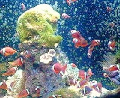 2009/07/09 15:15 沖縄ダイビングではこんな景色が見られます!