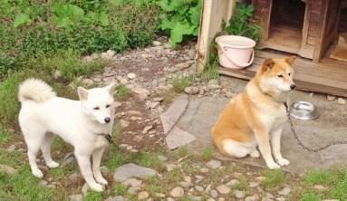2011/ 9/ 9 12:52 犬@想いやりファーム