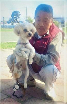 2012/ 6/26 8:48 シーズーとヨークシャーのmix犬