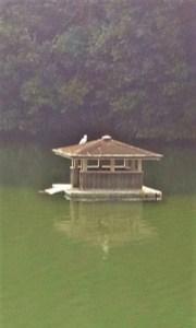 2012/11/ 8 10:15 池に浮かぶ東屋