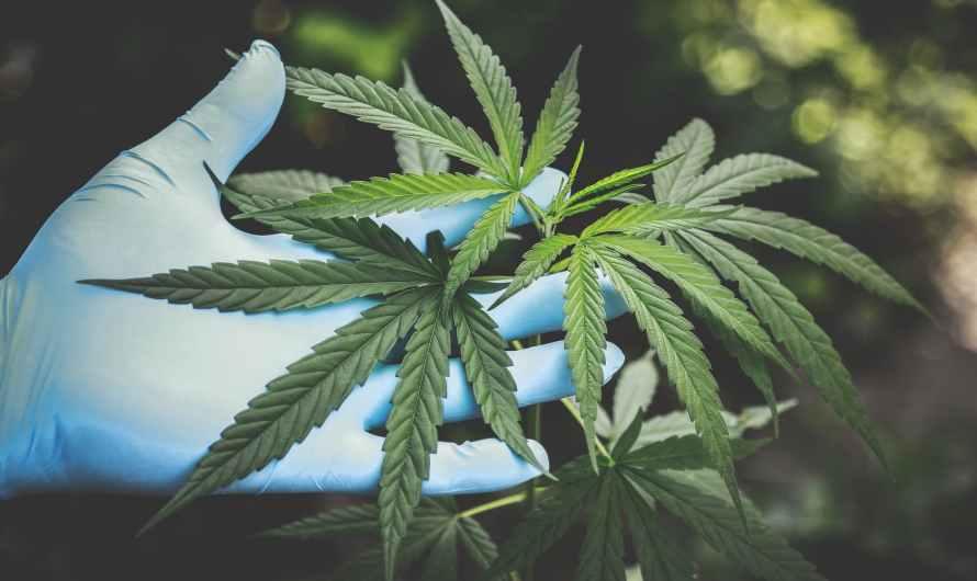 Publica reglamento para uso de cannabis la Secretaría de Salud de México