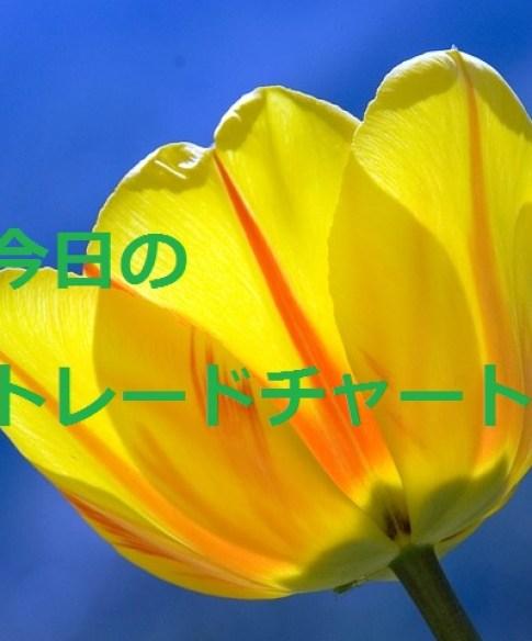 tulip-271352_640 (3)