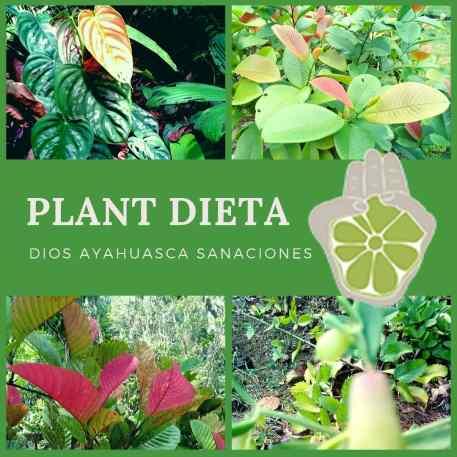 PLANT DIETA