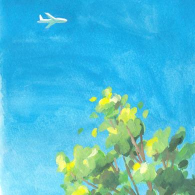 青空 飛行機 木