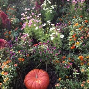 色んな秋  touch of autumn