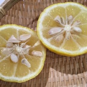 柚子湯を承けるMidwinter