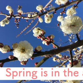 #1 Spring is in the air