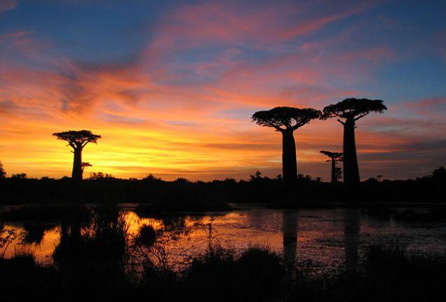 baobabs_Madagascar (1)