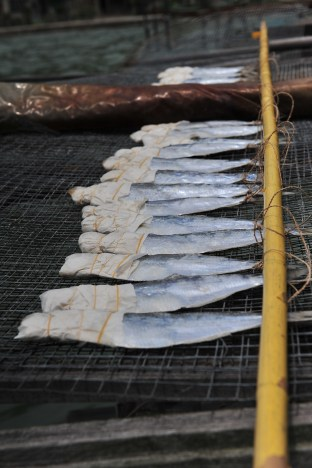 The traditional salted fish needs around seven days to get evenly dried. Ho said it can sell at the price of 320 Hong Kong dollars to HK$ 400 per kilogram.