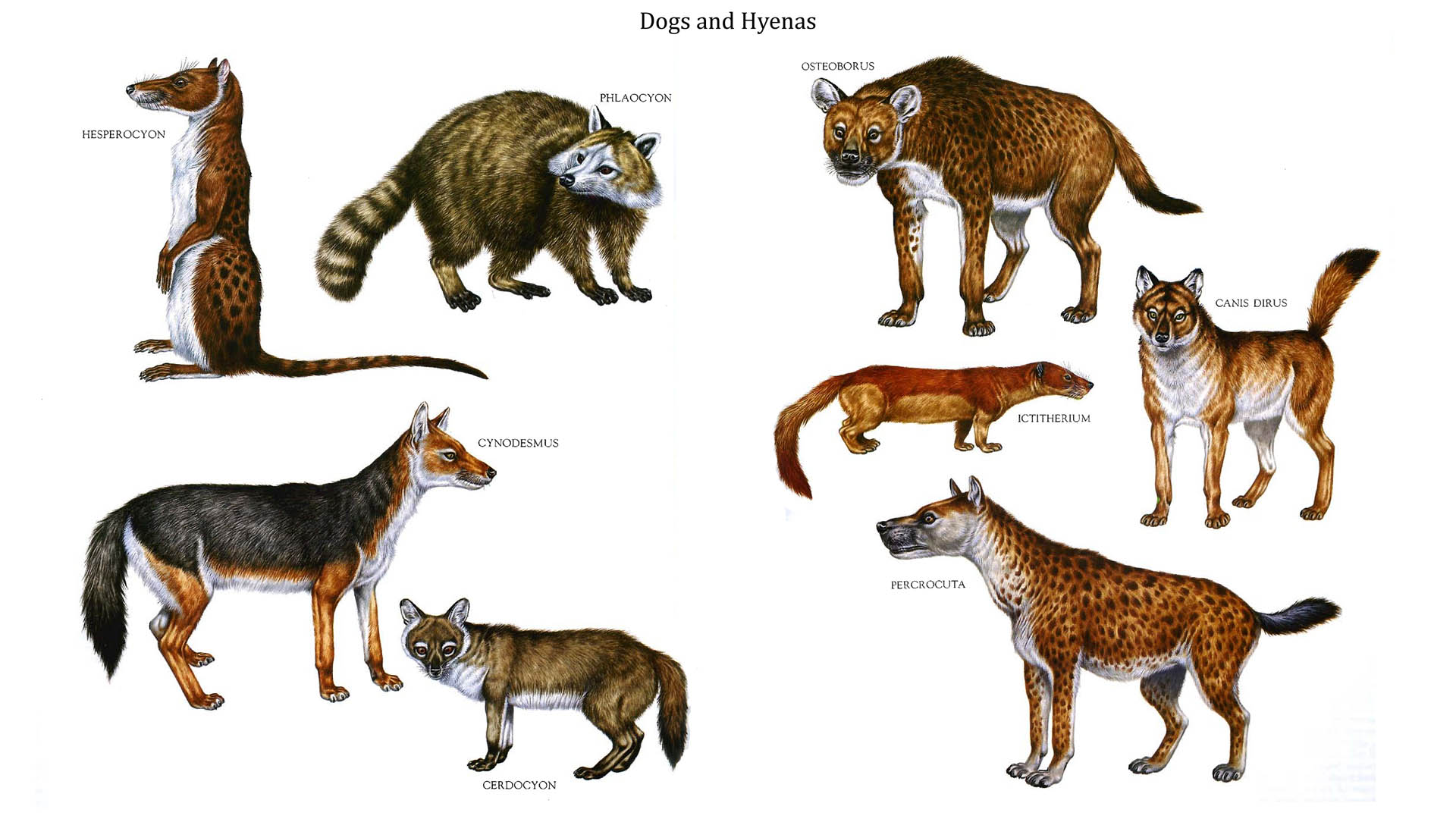 Dogs And Hyenas