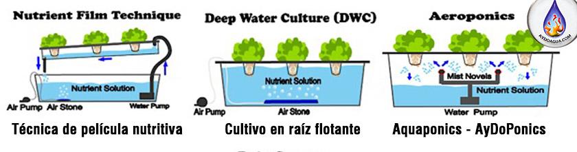 Hidroponia-Raices en agua-aydoagua