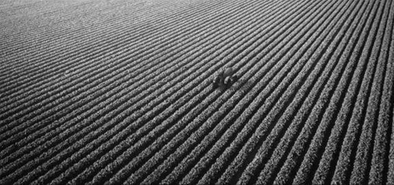 Farm image-4