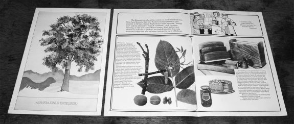 Plant a tree in 73-campaign-leaflet-bowaters guide to Britains most common trees-3