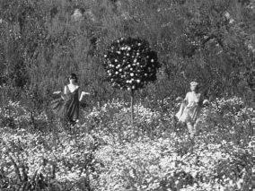 daisies-1966-sedmikrásky-1