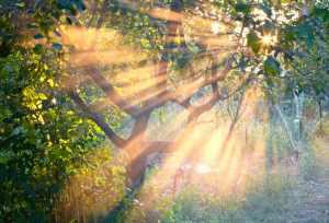 Sun rays in the garden