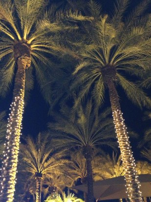 Palm trees in the light, I can see, late at night. Darling I'm willing to greet you, Come to me baby.
