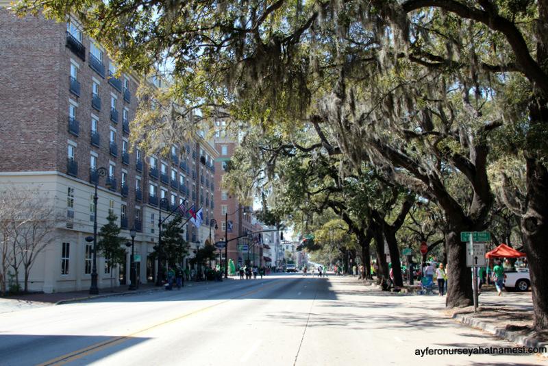 Oak Live ağaçları caddeleri süslüyor…