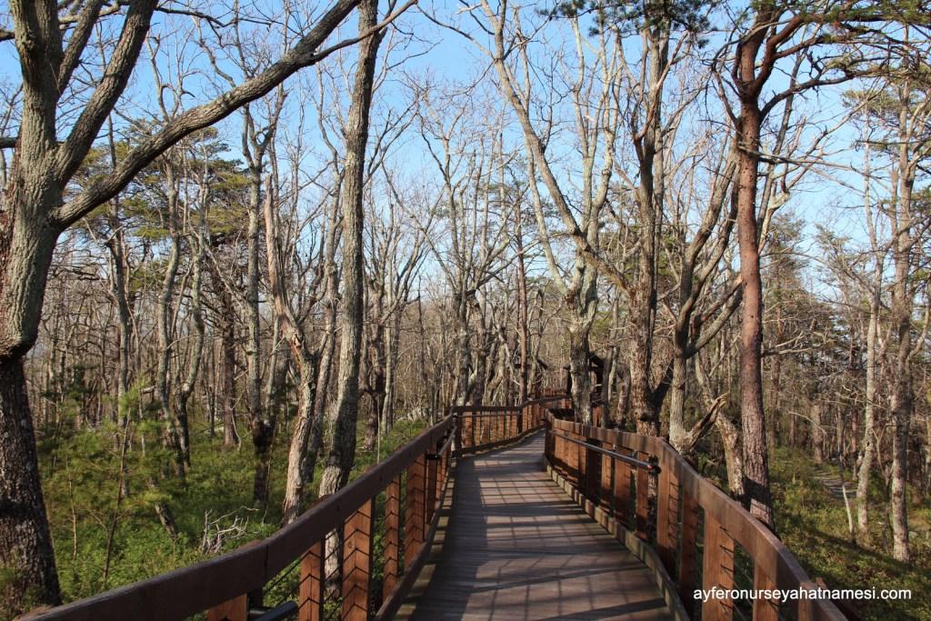The Doug Ghee Accessible Trail isimli ahşap yürüyüş yolu,