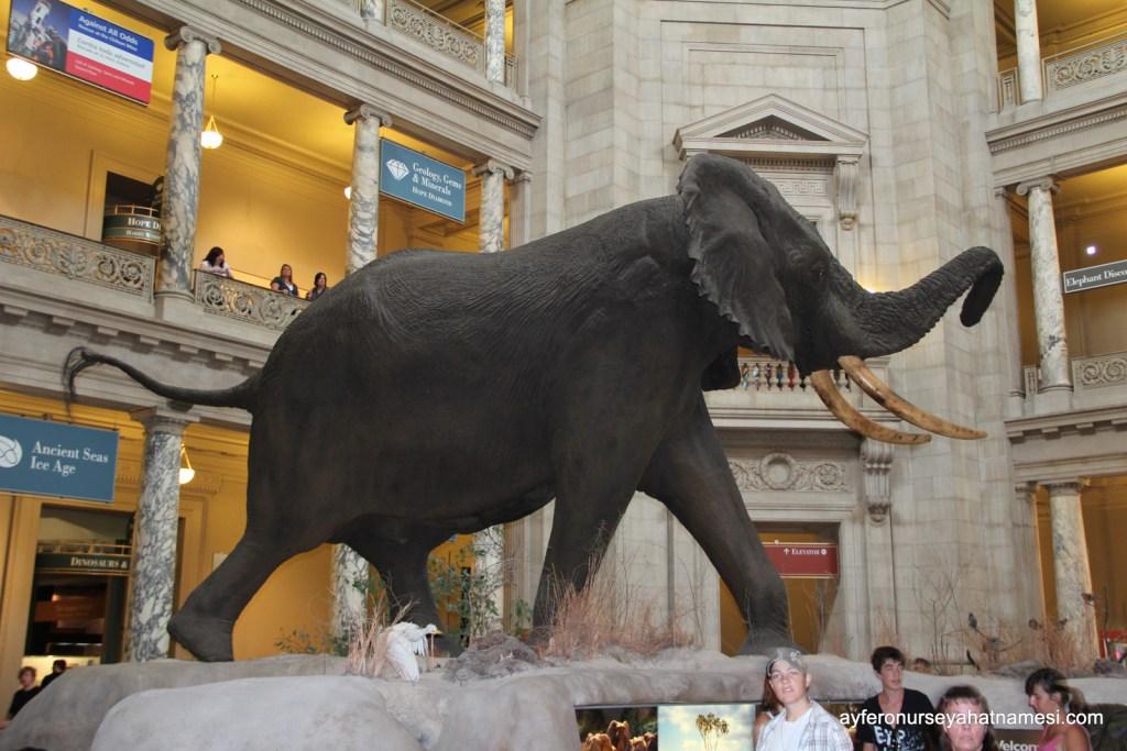 National Museum of Natural History - Washington DC