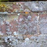 Les Lichens de Vaux-Le-Vicomte