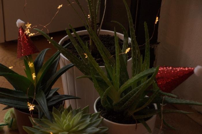Plantjes met hoedjes