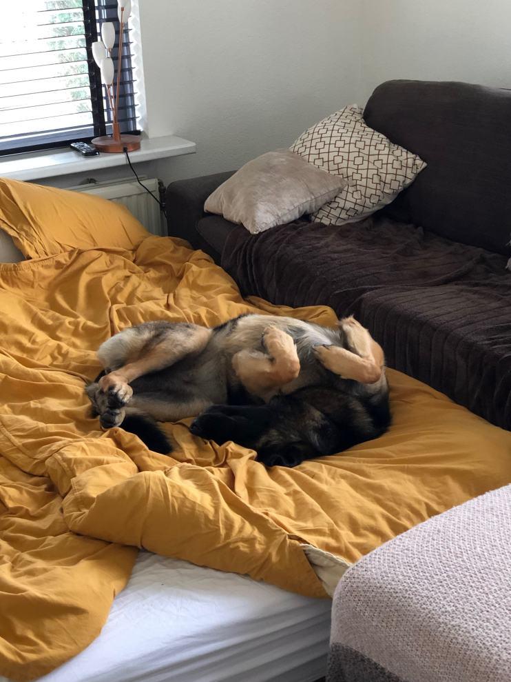 Lola op het grote bed