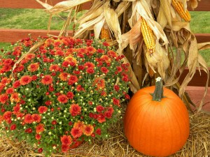 thanksgiving-482977_1280