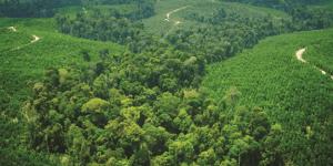 Model Bisnis Perusahaan Sukanto Tanoto yang Ramah Lingkungan Jadi Bahan Riset