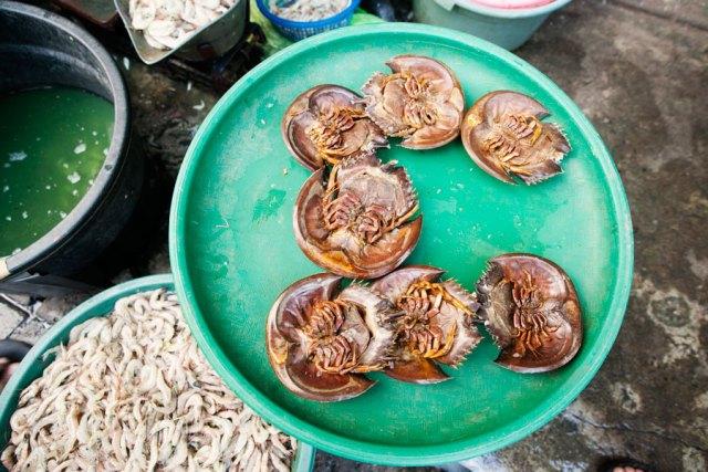 Mimi lan Mintuna, horseshoe crab