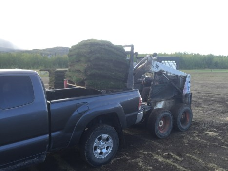 Loading up with Sod at Sodbusters Sod Farm.