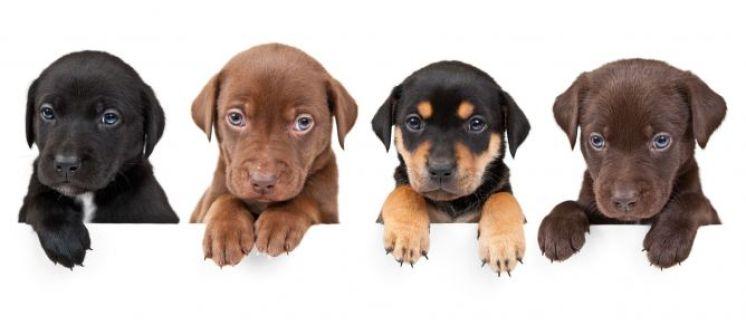 cachorros.jpg - 26.33 KB