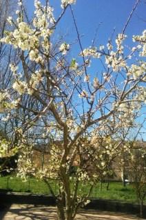 Residencia - Primavera 4