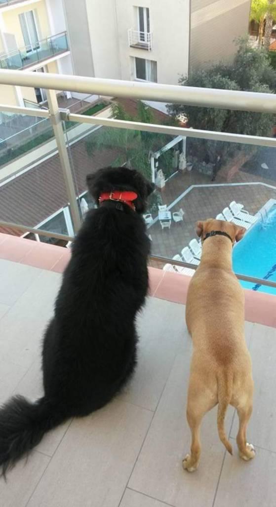 lloret de mar con perros
