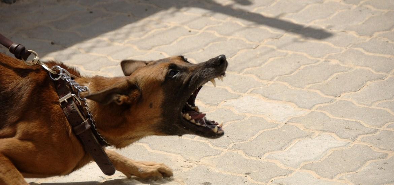 Como hago para que mi perro no tire de la correa