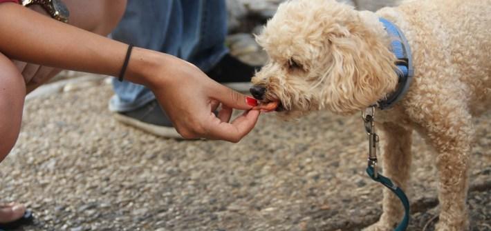 piramide alimenticia perro