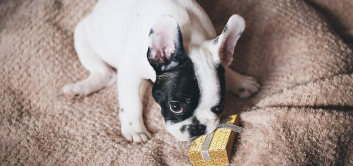 california prohibe la venta de perros