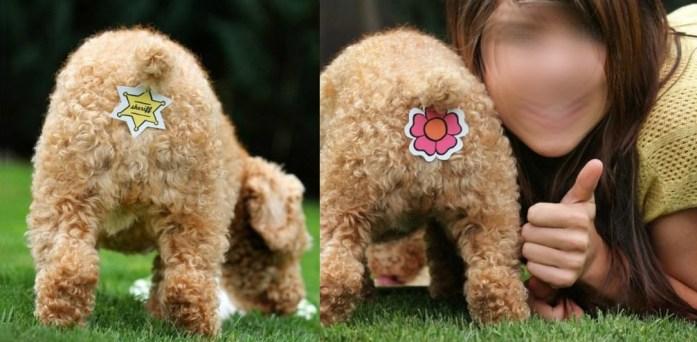 última moda en perros