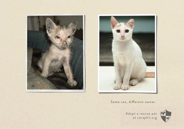 Iklan Layanan Masyarakat Paling Mengena - Iklan-tentang-perlindungan-pada-hewan
