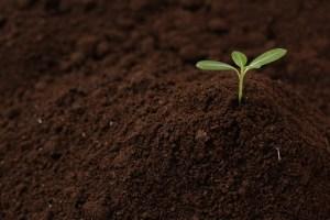 大地に芽/カパ水土