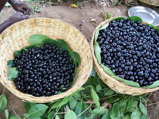 Jambu fruit Pic credits: Google