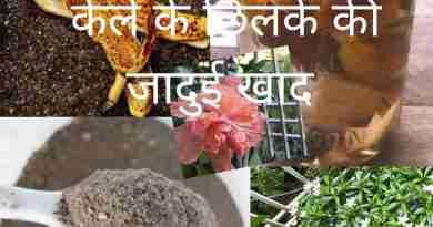 Banana peel fertilizer for plants (kele ke chilke ka fertilizer)