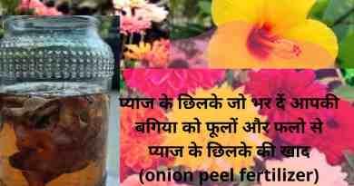3 type onion peel fertilizer
