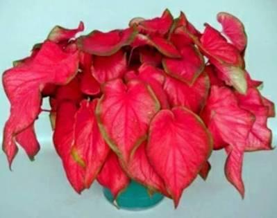23 Indoor plants (ghar ke andar chalne wale plant)